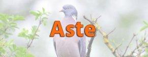 Attrezzature per colombaccio - Aste