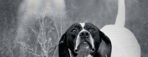 Cinofilia - Articoli per cani